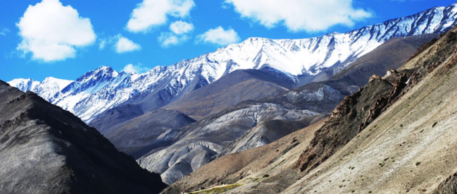Tibetan Sand Grouse
